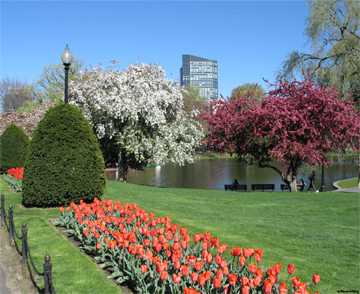 bostoncommon.jpg